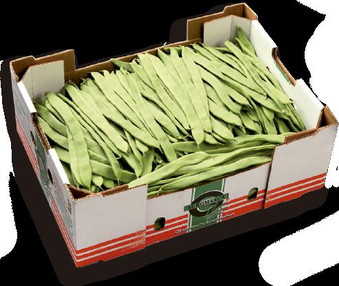 judia verde mercamadrid