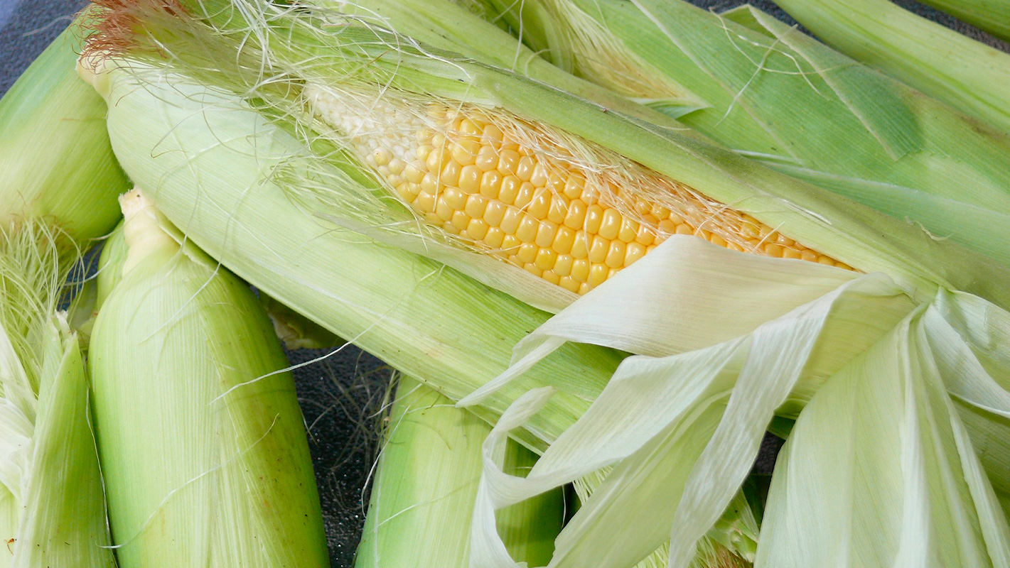 productor maiz