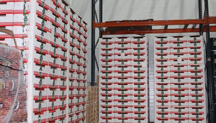 grupo marcafruit instalaciones marruecos