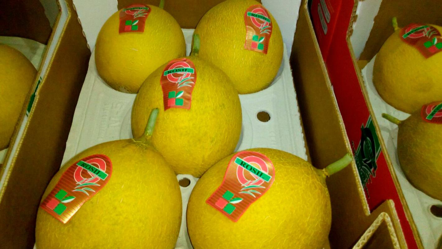 distribuidor melón galia