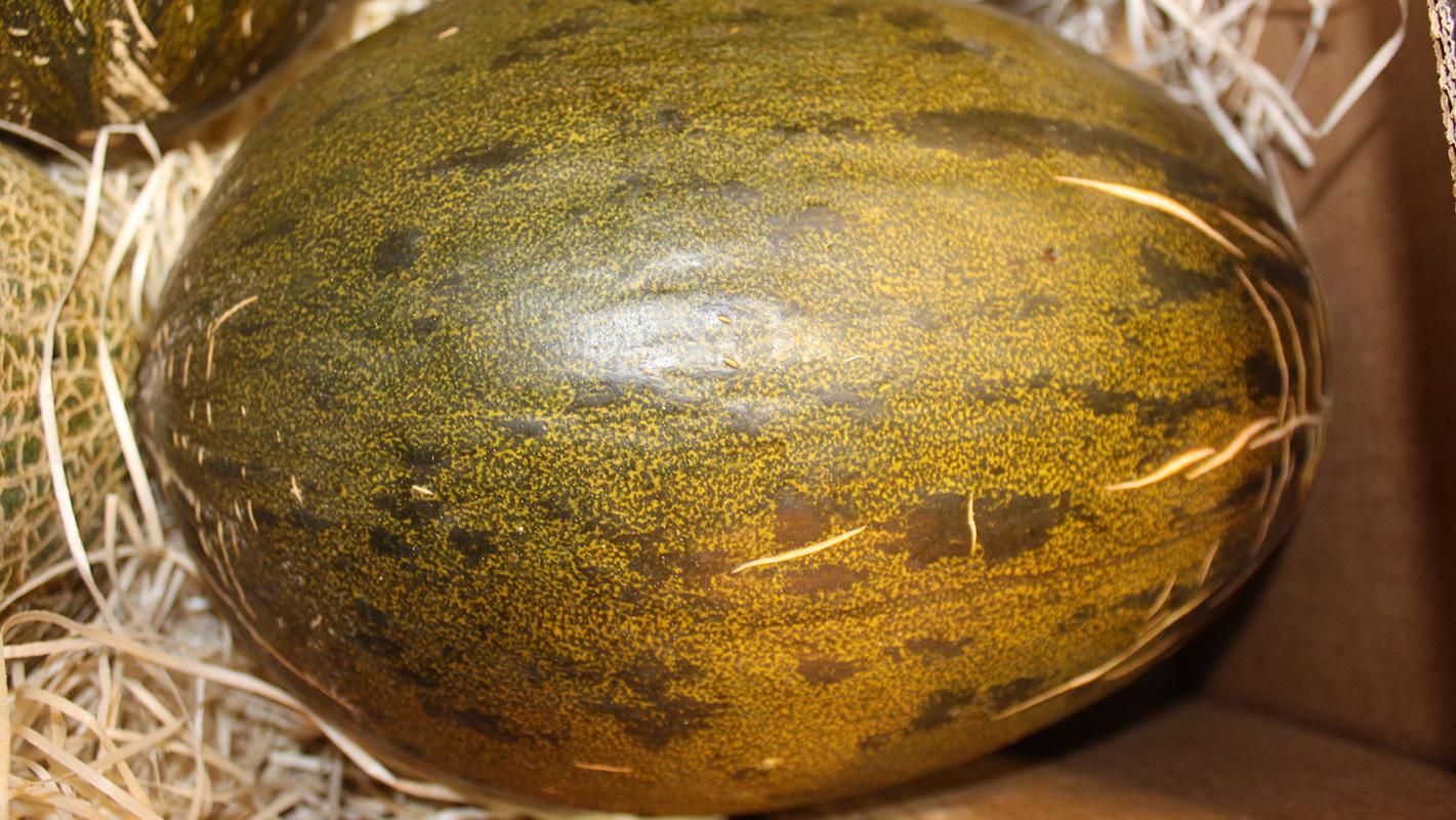 melón piel de sapo mercamadrid