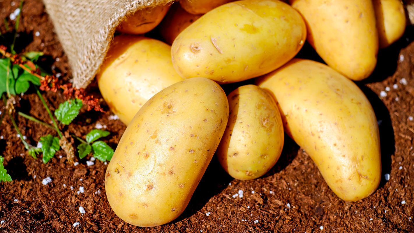 mayorista patatas