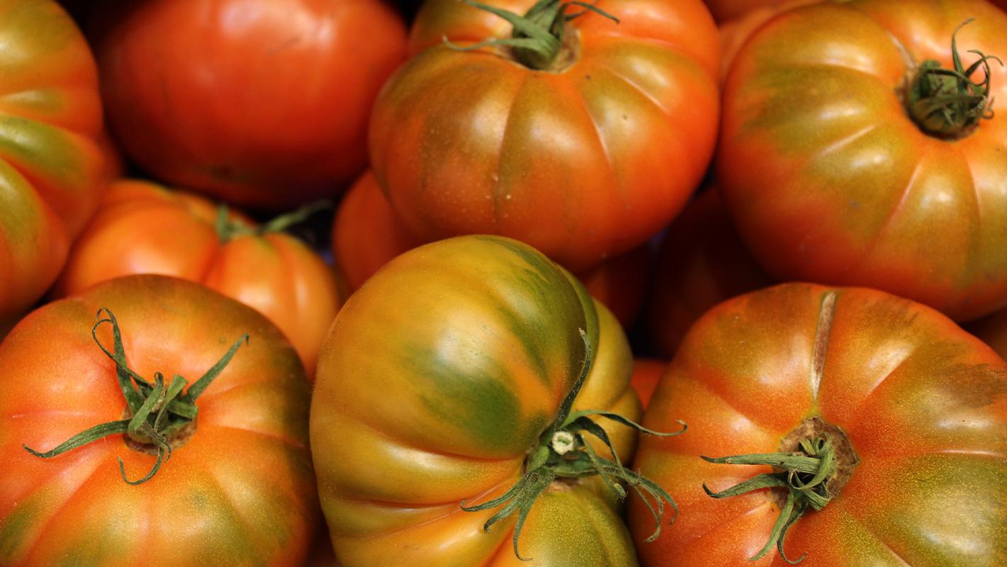 proveedor tomates